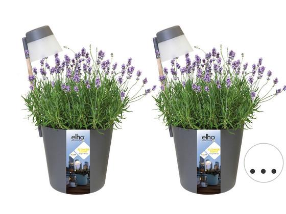 2x Elho Flowerlight Bloempot Antraciet