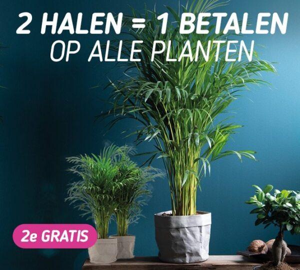 Nu 2 halen = 1 betalen op alle plantendeals Profiteer van deze waanzinnige aanbieding